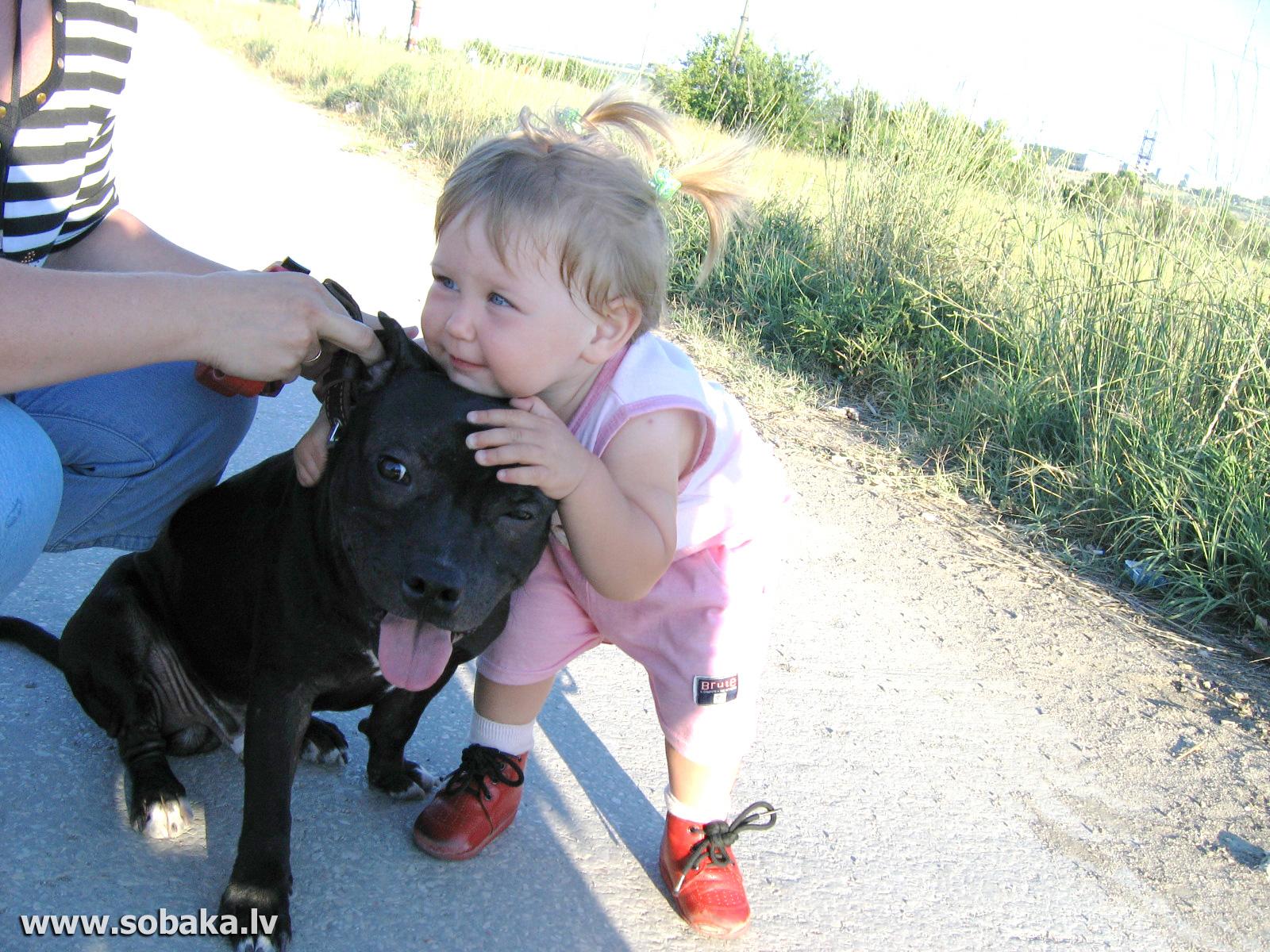 Фото бультерьера с ребенком