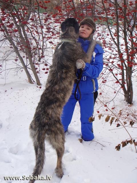 Вейгари Жасмин для Волшебного Леса Рябиновый рай... Питомник ВЕЙГАРИ