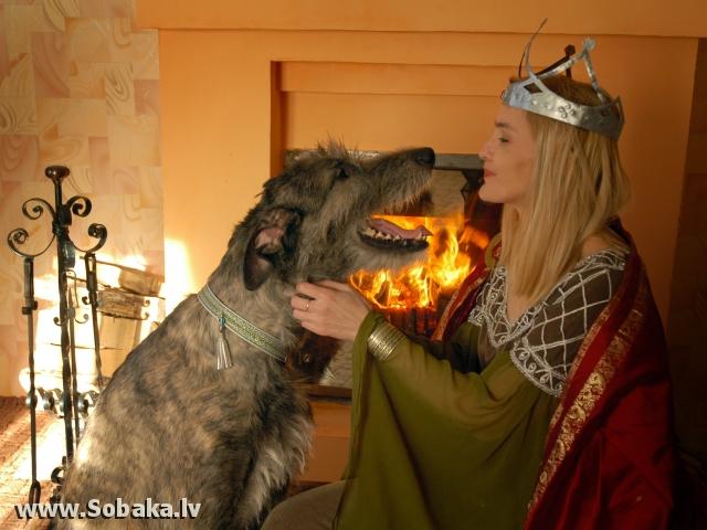 Вейгари Жасмин для Волшебного Леса 8 марта. Фотосессия в подарок от детей...   Питомник ВЕЙГАРИ