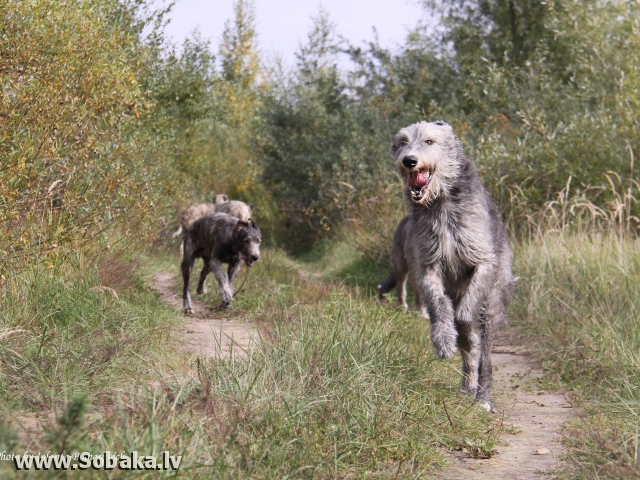 Vejgari Haisi Foto by Jolanta B., 20.03.2010. Kennel VEJGARI