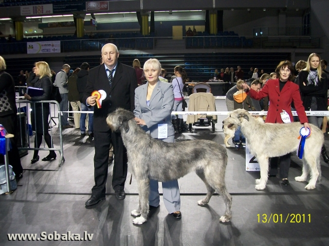 International dog show 13.02.2011 in Tallinn