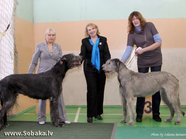 25.02.2012. Speciality Show for Sighthounds, Riga (LV)