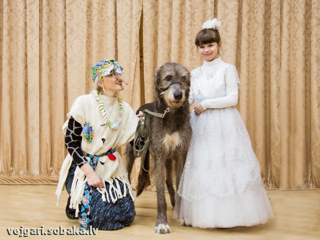 Вейгари Жасмин для Волшебного Леса Новый год 2012-2013 Питомник ВЕЙГАРИ