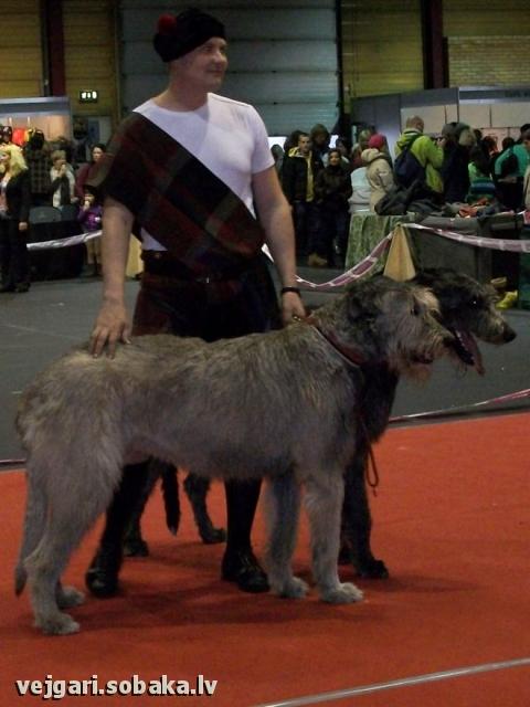 Irish wolfhounds Kex & Knopa Kennel VEJGARI