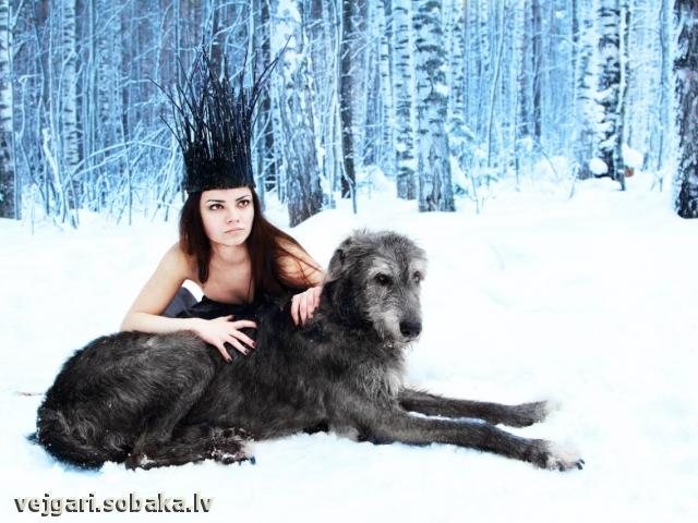 Vejgari Jasmin AT Volshebniy Les  Kennel VEJGARI