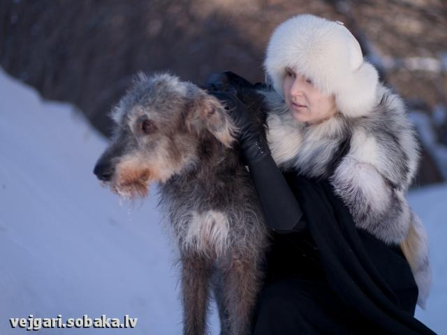 Вейгари Жасмин для Волшебного Леса  Питомник ВЕЙГАРИ
