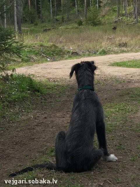 Puppy № 8 - Senorita