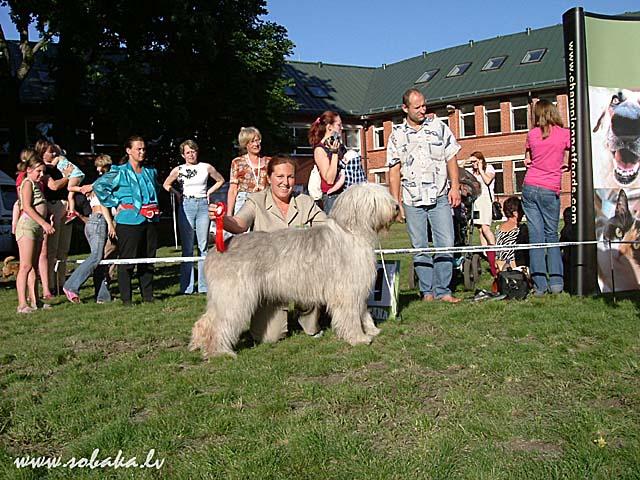 Описание породы южнорусская овчарка, фото, щенки купить