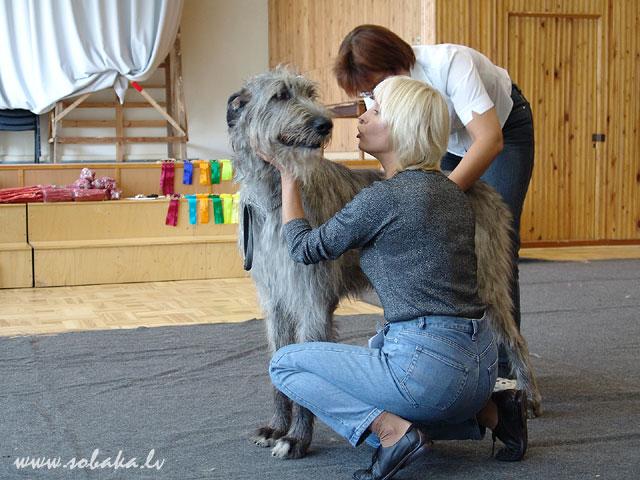 Irish wolfhound Vejgari Efa