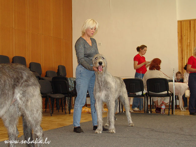 Irish wolfhounds