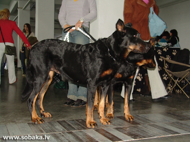 Босерон 