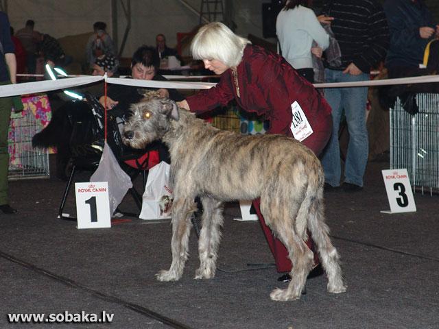 Вейгари Джонглэй 16.11.2008. «ZOOEXPO 2008», Латвия Питомник ВЕЙГАРИ