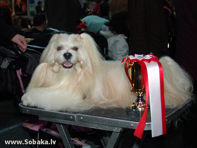 Лхасский апсо 