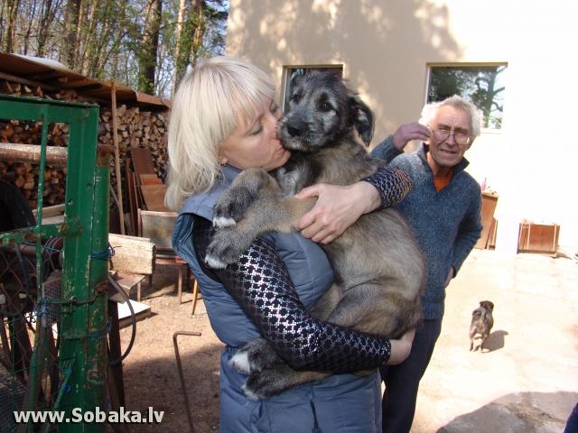 Vejgari Kasandra 2 month Kennel VEJGARI