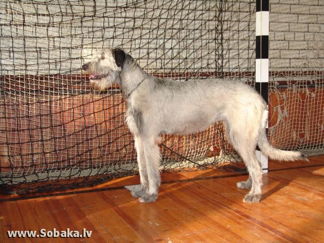 Vejgari Kasandra 13.03.2011 Kennel VEJGARI