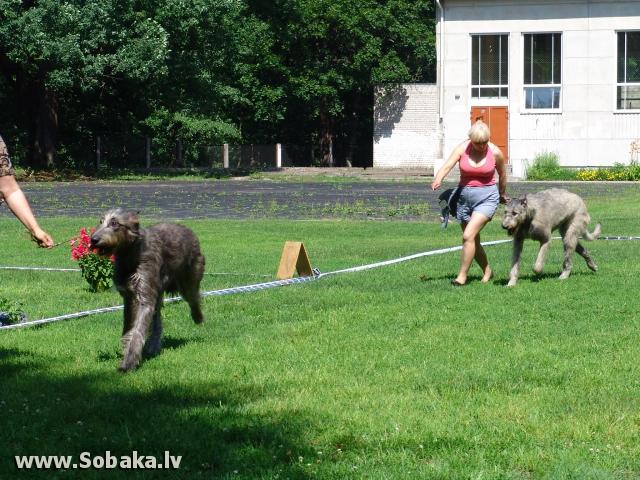 Vejgari Kasandra 02.07.2011 Kennel VEJGARI