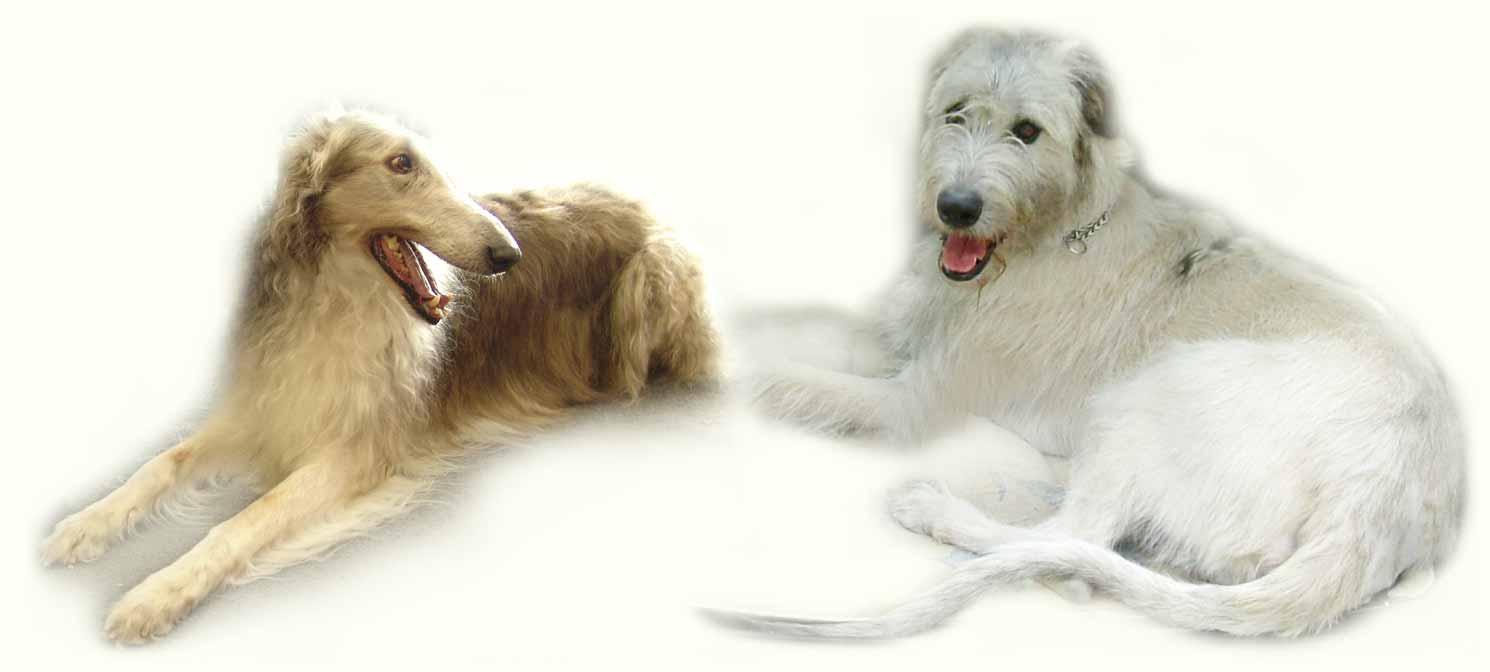 СОБАКИ всех пород и ВСЕ породы собак!